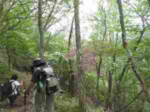 林の中の色彩をみてください