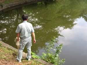 池の中に見えますね